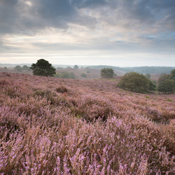 Heathland dawn