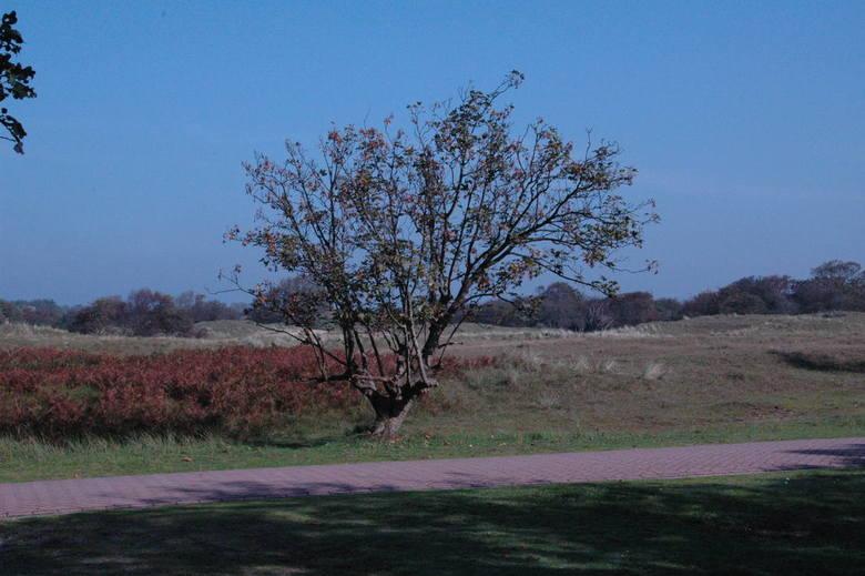 boom  - foto gemaakt met nikon d70 18 200 lens