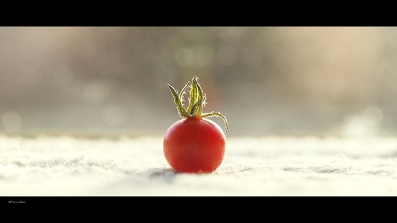 Klein - Een klein tomaatje lijkt groot op de foto.<br /> <br /> ©MotionMan 2016