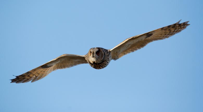 Toevlucht - Toevlucht<br /> <br /> Een Ransuil vliegt naar me toe... Uitzonderlijk...