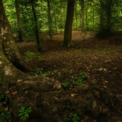 Roots hdr