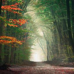 Portal of seasons