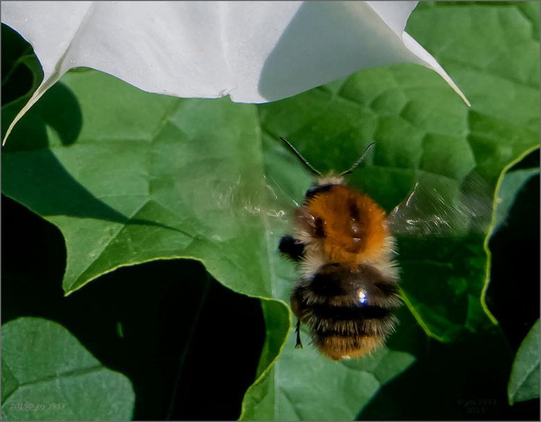 "Mijn eerste insect - Mijn ""eerste insect"" met mijn systeemcamera."