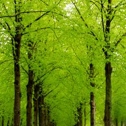 Bomenrij in fris lentegroen
