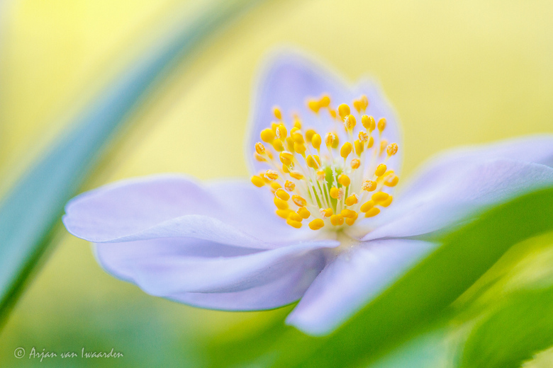 Colours of Spring -