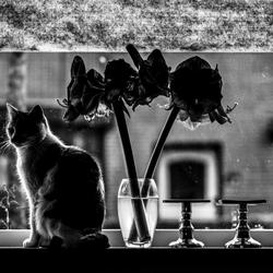 Op de vensterbank