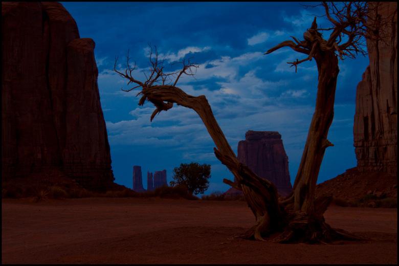 silhouette Tree2 - Hier een beter belichte versie van de vorige.