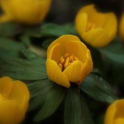 de lente komt er heus aan....