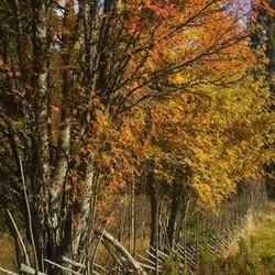 Zweedse herfstkleuren