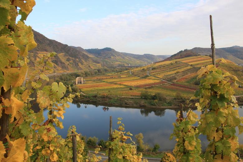 herfst aan de moesel - Wind stil weer, mooie herfst kleuren langs de Moesel.