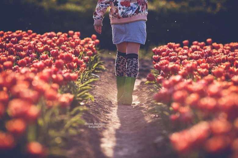 Tulpen -
