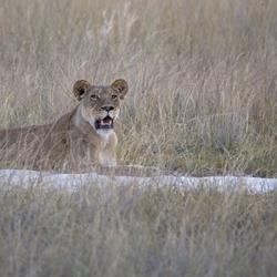 Botswana 71