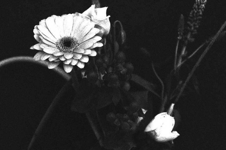 flowers - bosje zwart wit