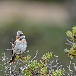 Patagonia bird