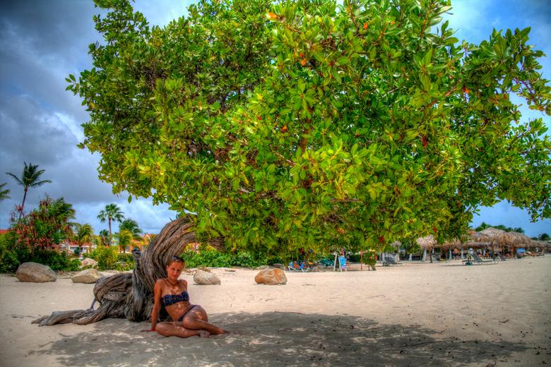 Famous divi divi - Een van de beroemde zogenaamde dividivi tree's. Hier genomen in HDR.
