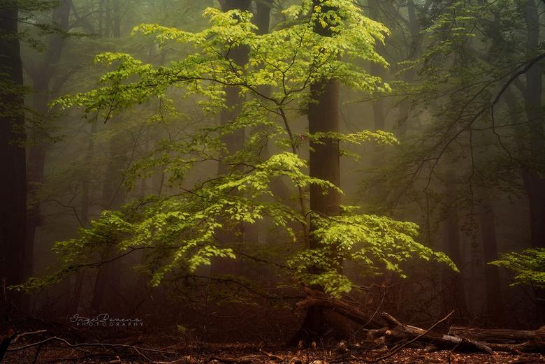 Glow Up. - Een spiksplinternieuw plaatje, vanochtend geschoten. Het zuiden des lands werd getrakteerd op een mistige ochtend en ik was er gelukkig op