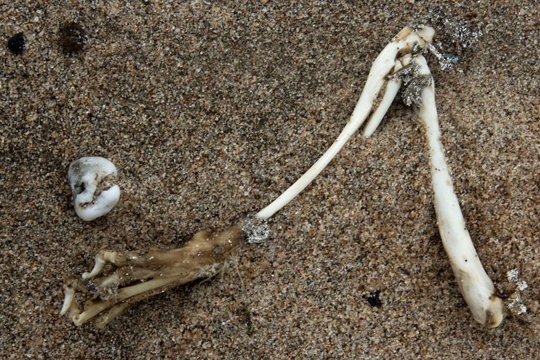 vogelpoot - een vogelpoot op het Waalstrand bij Fort Pannerden.