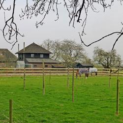 Boerderij met paarden