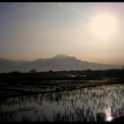 Rijstveld Java Indonesië