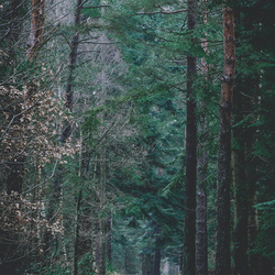 Chilly forest