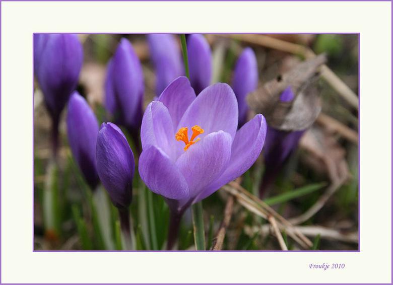 """Lente - Krijg de lente ook in de bol<img  src=""""/images/smileys/smile.png""""/> Bedankt voor de reacties op mijn vorige foto .<br /> Groetjes Froukje"""
