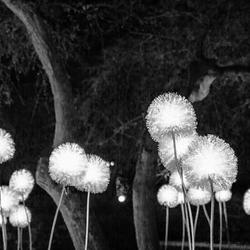 Glow black and white