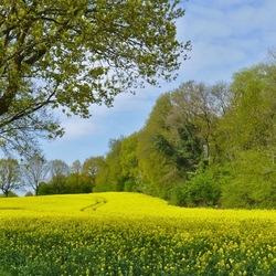 Groen en geel