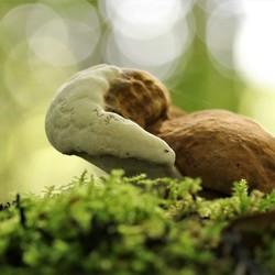 paddenstoeltje in het groen