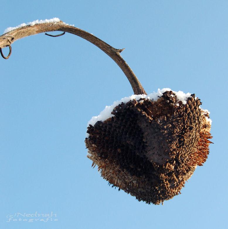 Winterbloem 2 - .. zo ook deze