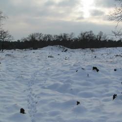 loonse en drunense duinen in sneeuw