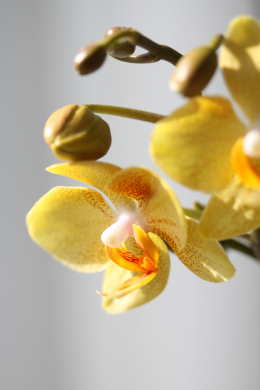 Orchid - Ook de orchidee is blij met een beetje zon.