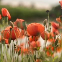Een bloemetjesgordijn