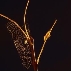 Spin badend in natriumlicht