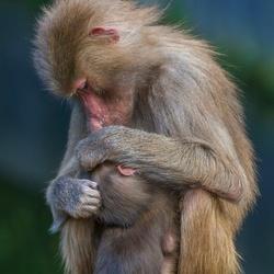 Moederliefde...