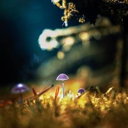 Mushroom magic #2