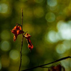 een eerste teken van de herfst