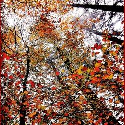 De vier seizoenen .....herfst....