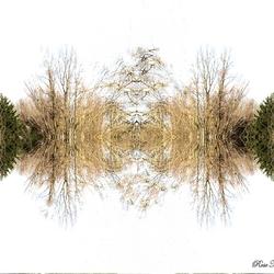 Spiegeling in de natuur