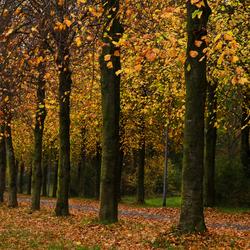 Autumn In Groningen (InspireMediaGroningen