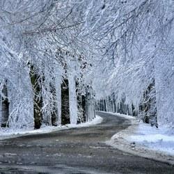 Tunnel van sneeuw.JPG