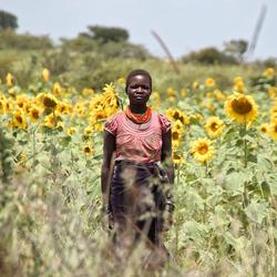 Karamajong dame in zonnebloemen