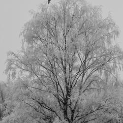 Op de uitkijk in een witte boom