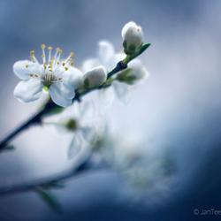 Yèhhh spring......!!