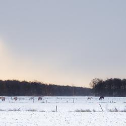 Winter in Vries - weiland