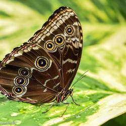 Vlindertuin 4