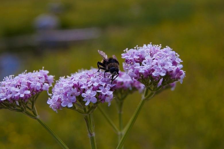 bloem - Veel kennis over planten/bloemen heb ik niet, mooi zijn ze wel!
