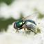 de schoonheid van een vlieg