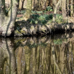 speigeltje ,spiegeltje in het bos.