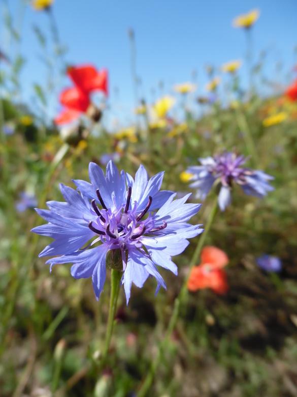 Wild bloemenveld - Wild bloemenveld.