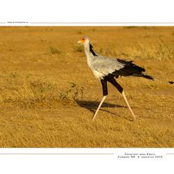 Secretary Bird, Kenia